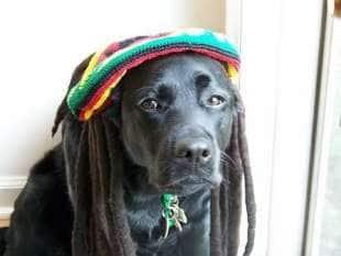 i cani si calmano con il reggae