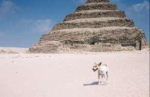 cani randagi al cairo 1