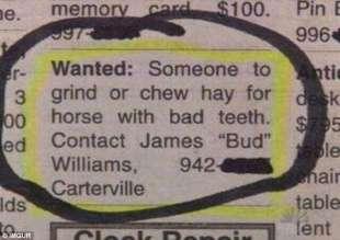 cercasi masticatore di cibo per cavalli