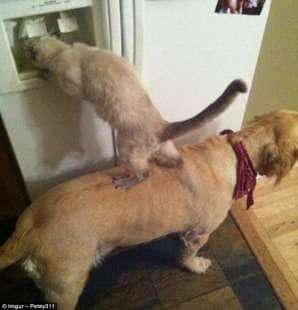 cani e gatti per un obiettivo comune
