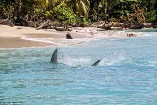 razza maculata contro squalo martello 11