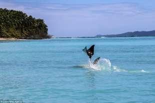 razza maculata contro squalo martello 5