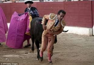 il torero ivan fandino 5