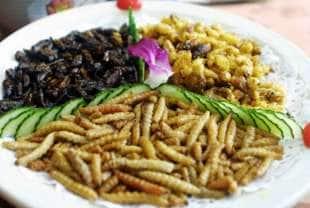 piatto di vermi
