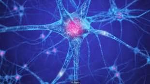 a 40 anni il cervello non deve subire troppo stress