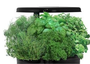 kitchen gardening 3