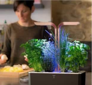 kitchen gardening 5