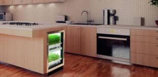 kitchen gardening 8