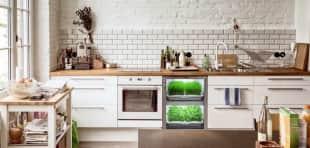 kitchen gardening 9