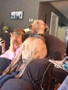 cane scioccato 1