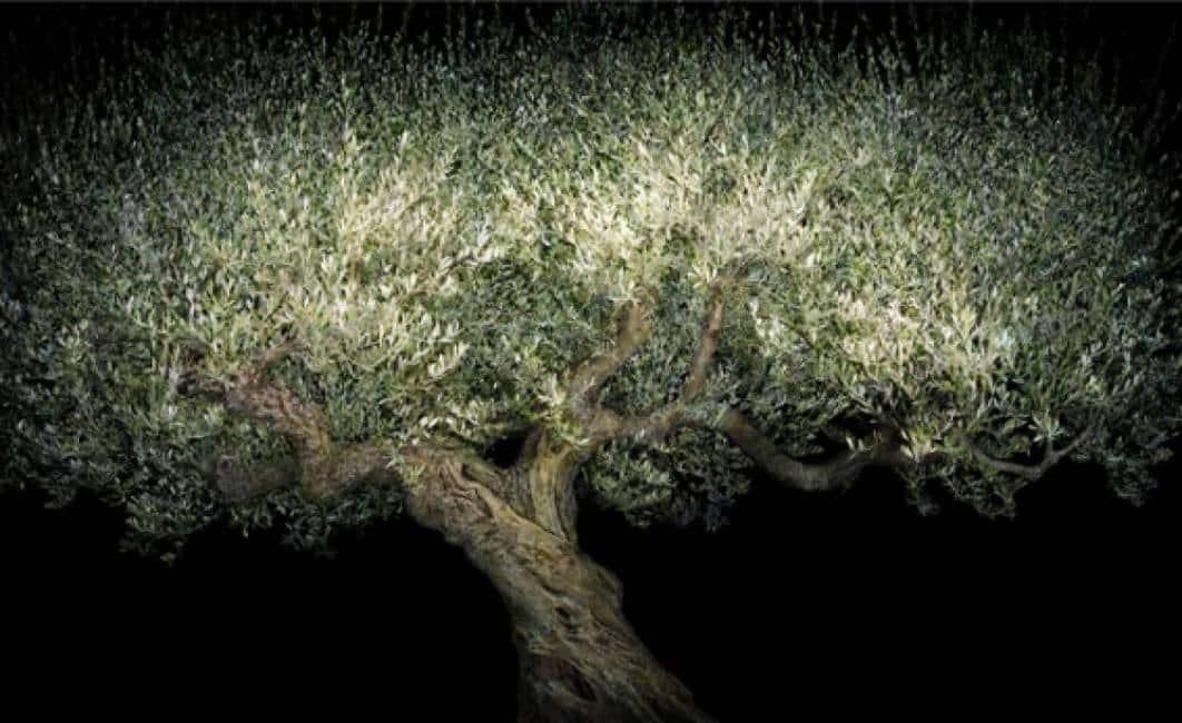 Essere albero e una lotta per sopravvivere alla ricerca - Lotta alle talpe in giardino ...