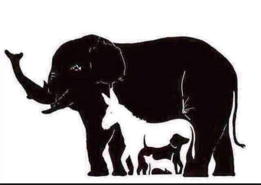 Illusioni Ottiche Quanti Animali Vedete In Questo Disegno Ci Sono