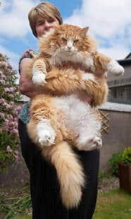 Garfield Gli Fa Un Baffo Quanto Può Essere Grande La Stazza Di Un