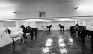 i cavalli di kounellis all'attico di sargentini