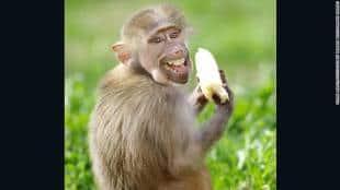 Il Concorso Sulle Foto Animali Più Divertenti Del Mondo I Comedy