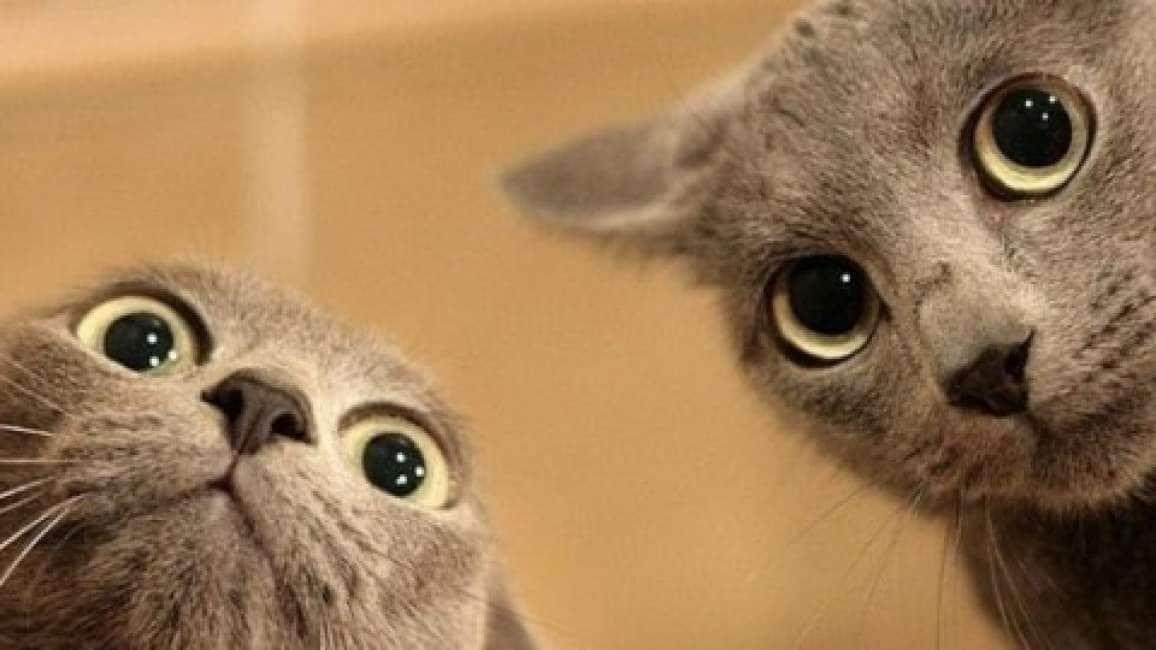 Perché I Video Con I Gattini Ci Tengono Incollati Allo Schermo Ecco