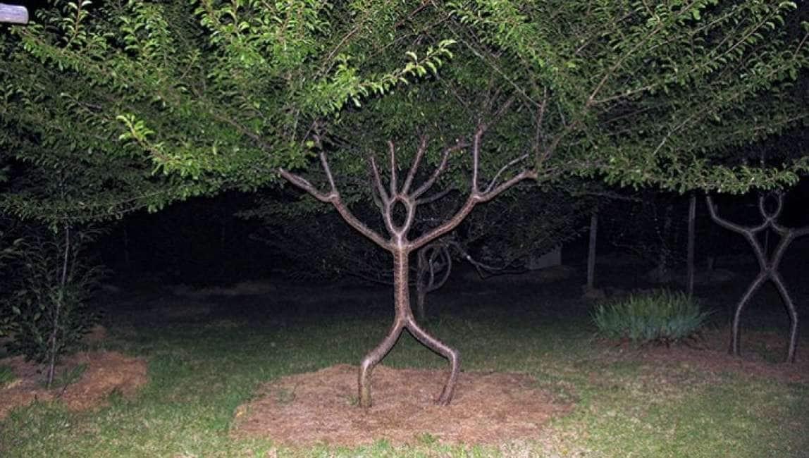 PER FARE UN ALBERO CI VUOLE ARTE! SI CHIAMA TREE SHAPING ED È UNA TECNICA A METÀ STRADA TRA IL DESIGN E IL GIARDINAGGIO....