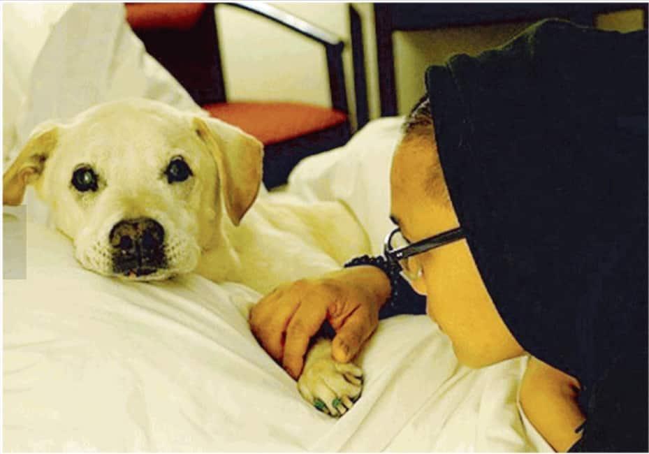 Morte Da Cani I Veterinari Spiegano Qual E L Errore Piu