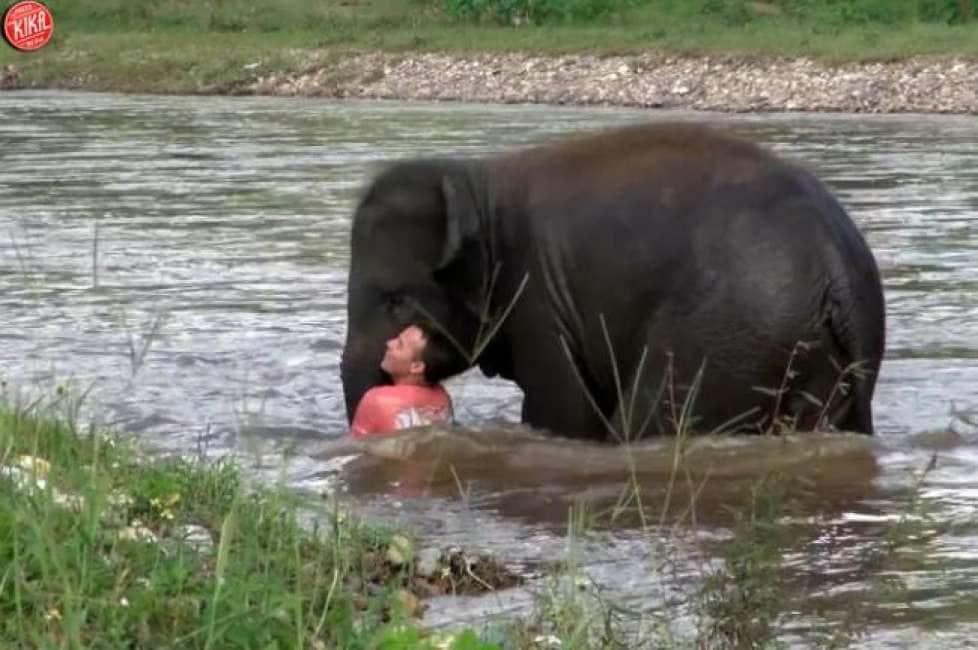 Elefante sesso video
