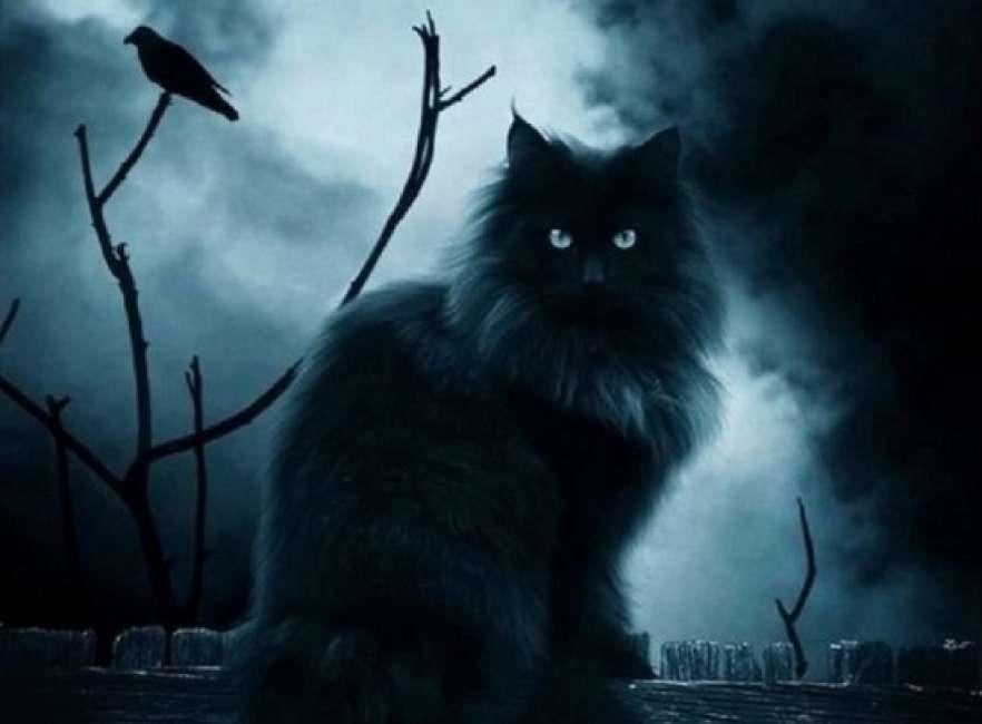 другой человеку стали нравиться коты мистика ли это глубоком сотейнике