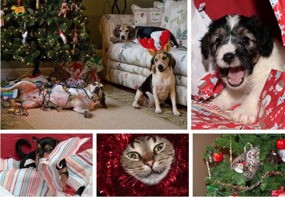 Immagini Natalizie Con Cani.Animali E Natale Gatti E Cani Sono Creature Adorabili Ma