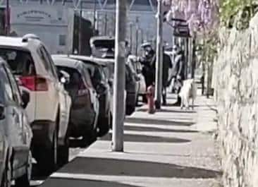 PASTORIZIA URBANA - FOLLIA A PALERMO DOVE UN UOMO È STATO AVVISTATO IN VIALE REGIONE SICILIANA MENTRE PASSEGGIA CON UNA PECORA: ...